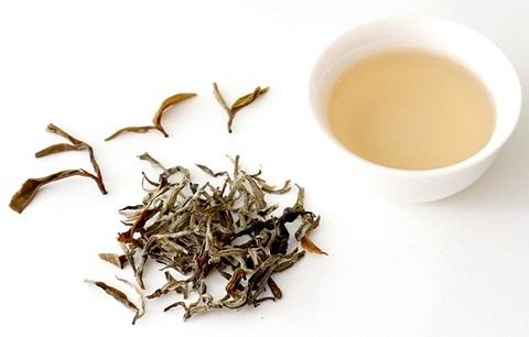 phân biệt bạch trà theo cách chế biến